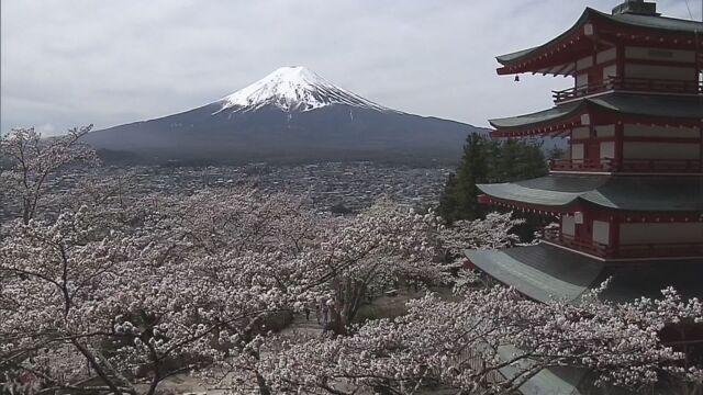 山梨県-桜と富士山と五重の塔を一緒に楽しむ