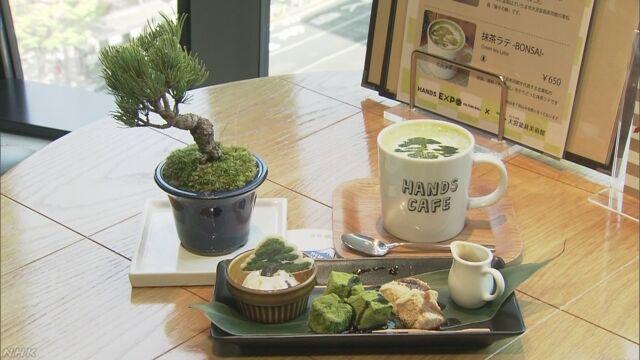 盆栽を見ながらお茶を飲む店が東京の銀座にできる