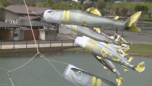 栃木県 川の近くに300匹の「あゆのぼり」を飾る