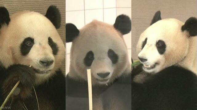 日本で生まれて育った3頭のパンダが中国へ行く