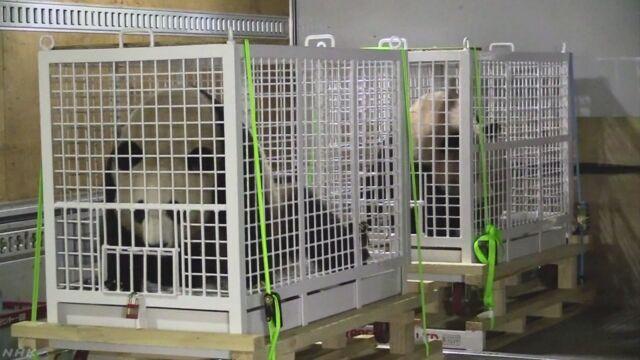和歌山県の動物園の3頭のパンダが中国に引っ越す