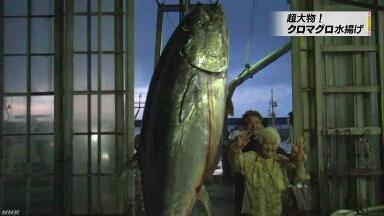 沖縄で重さ382kgの大きなマグロを釣る