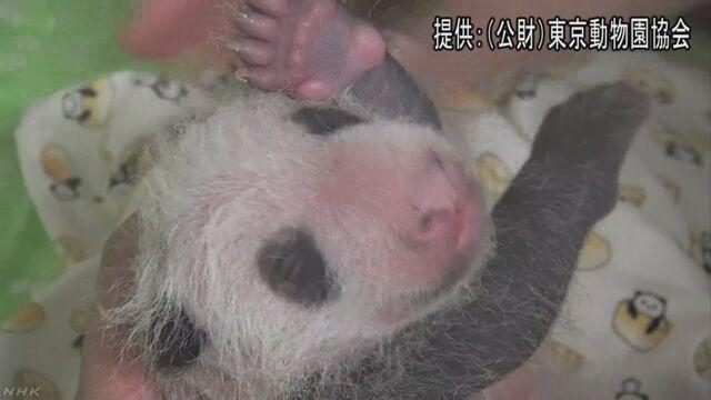 「上野動物園のパンダの赤ちゃんの名前を考えてください」