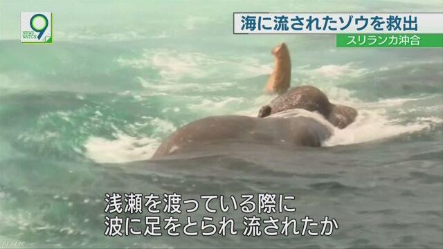 スリランカ 海に流された象を軍が助ける