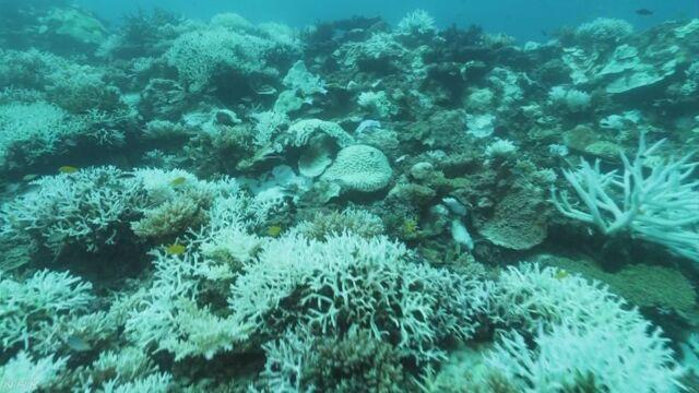 長崎県 世界でいちばん北にあるさんご礁が白くなる