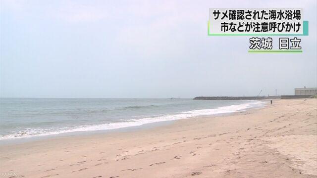 茨城県の海で30匹ぐらいのサメが見つかる
