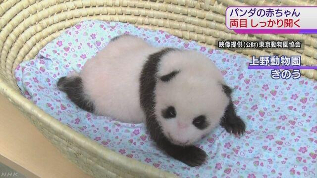 上野動物園のパンダの赤ちゃん 両方の目が開く