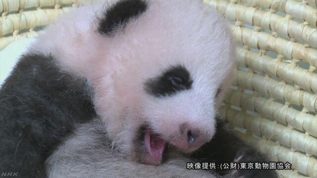 上野動物園のパンダの赤ちゃん 生まれてから2か月