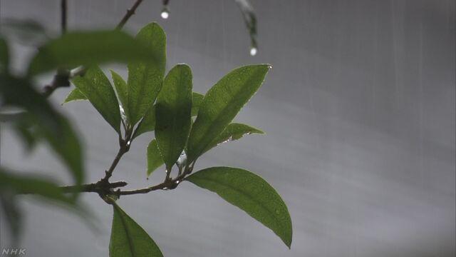 曇りや雨続き日照不足 農作物など注意 北日本と関東