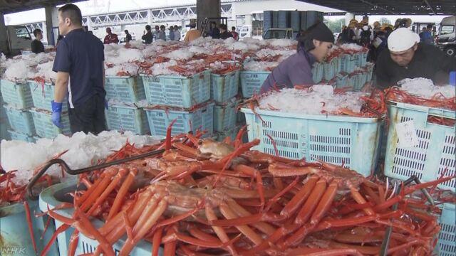鳥取県 ベニズワイガニの漁が始まる