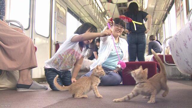走る列車の中で20匹の子どもの猫と遊ぶイベント