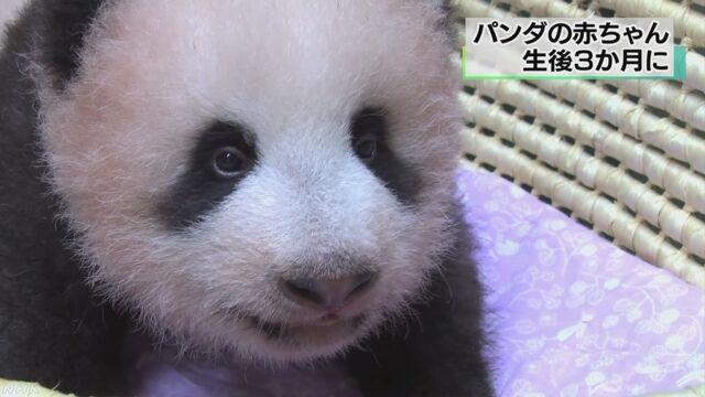 上野動物園のパンダの赤ちゃんが生まれて3か月になる