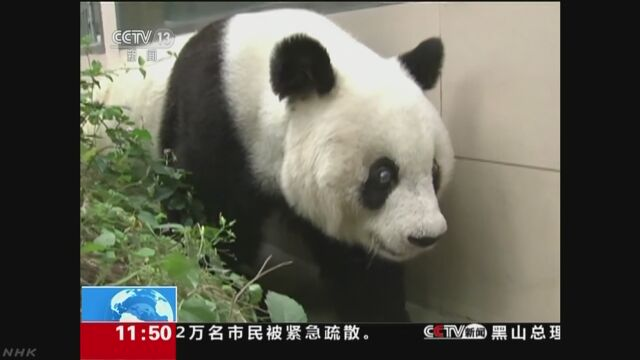 中国 世界最高齢のパンダ37歳で死ぬ