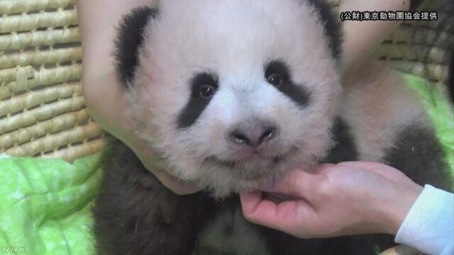上野動物園のパンダの赤ちゃんの名前は「シャンシャン」