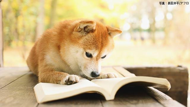 """ノーベル文学賞 """"読書したい""""と思ったあなたへ"""