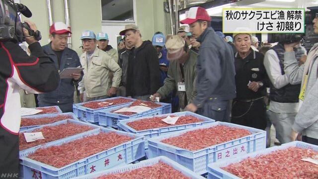 静岡県でサクラエビの秋の漁が始まる