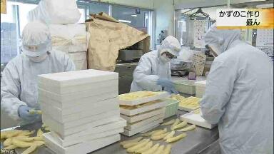 北海道の函館 正月に食べる「かずのこ」をたくさん作る