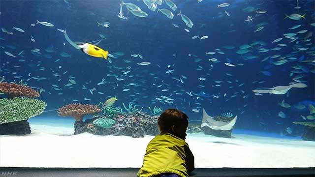 水族館で魚大量死 何があったか