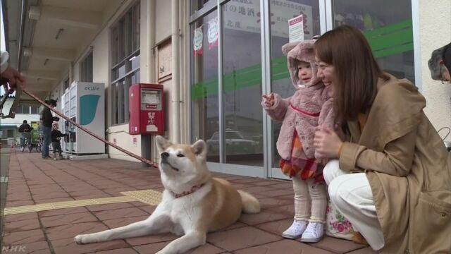 来年は「いぬ」の年 年賀状に使うため秋田犬の写真を撮る