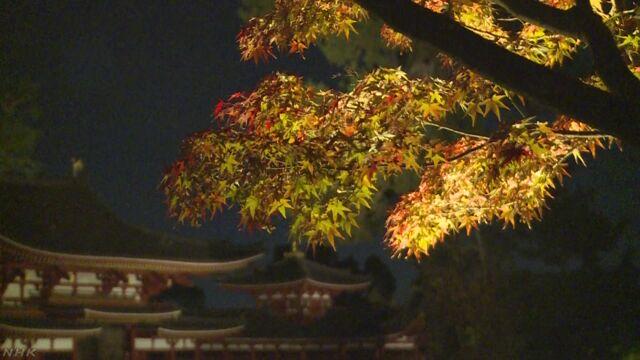 世界遺産 平等院 紅葉シーズン初のライトアップ 京都
