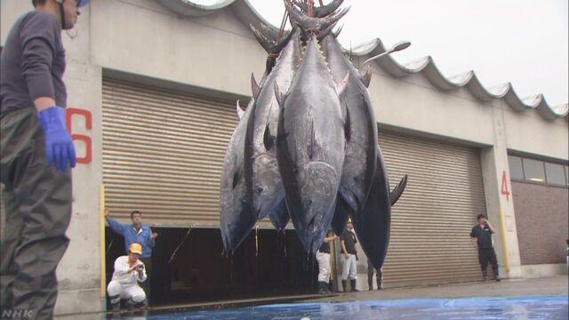 大西洋クロマグロ 漁獲枠 4年連続拡大で合意