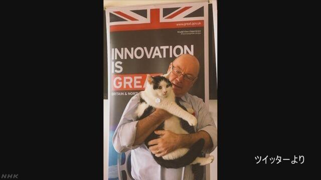 """英大使館のネコ """"ネズミ捕獲長""""に ネットで人気 ヨルダン"""