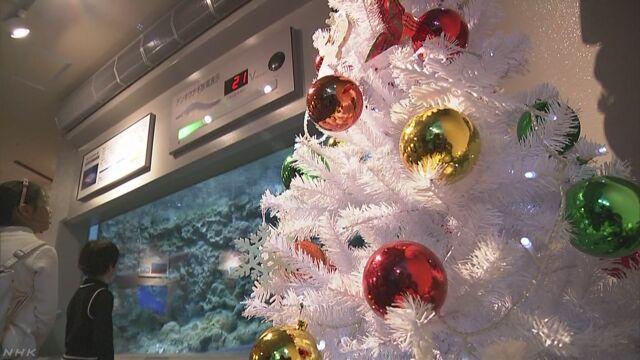 「デンキウナギ」の電気でクリスマスツリーが光る