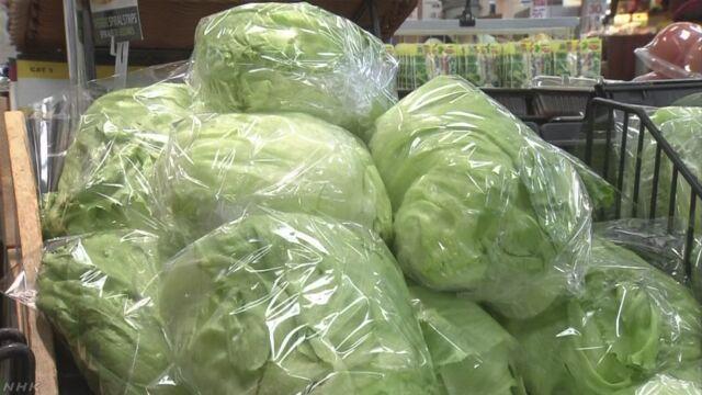 野菜価格高騰 レタスは平年の1.7倍