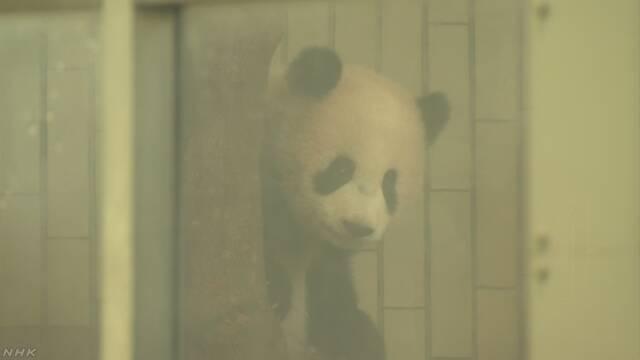上野動物園 パンダの赤ちゃんを見ることができるようになる