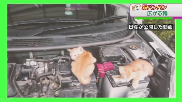 猫と車の安全を守るために「猫バンバン」をしてほしい