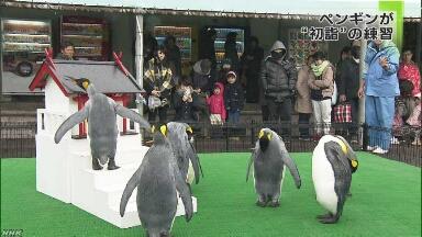 水族館のペンギンが神社にお参りする練習を始める