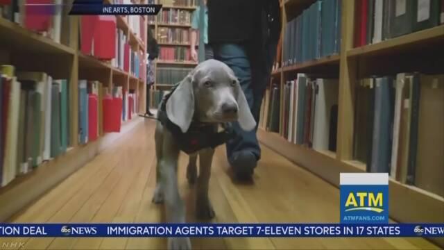 子犬をスタッフに任命 米ボストン美術館で嗅覚生かした仕事を