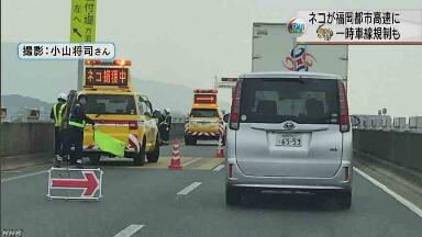 高速道路で「ネコ捕獲中」 車が通ることができなくなる