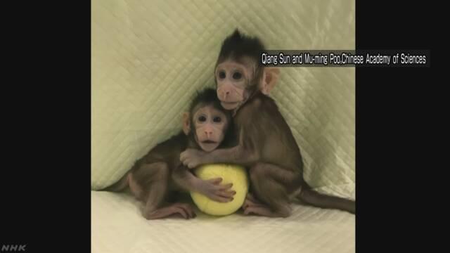 中国の研究グループ「クローンの猿を作った」と発表