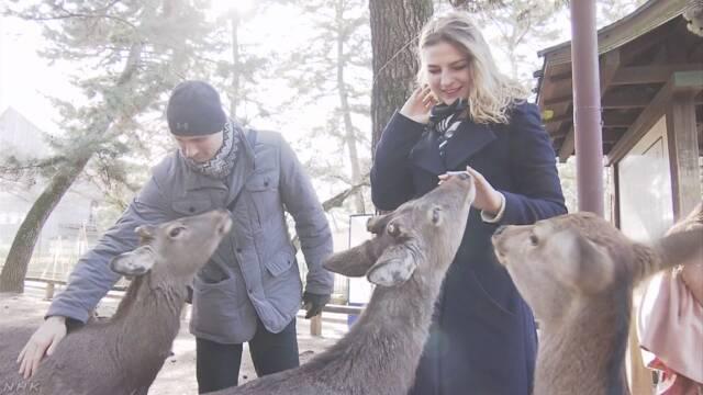 シカにかまれてけがの観光客が過去最多 奈良公園