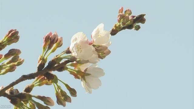 東京でいつもの年より9日早く桜が咲き始める