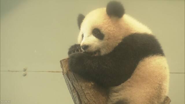 上野動物園 5月の連休はシャンシャンを見る抽選がある