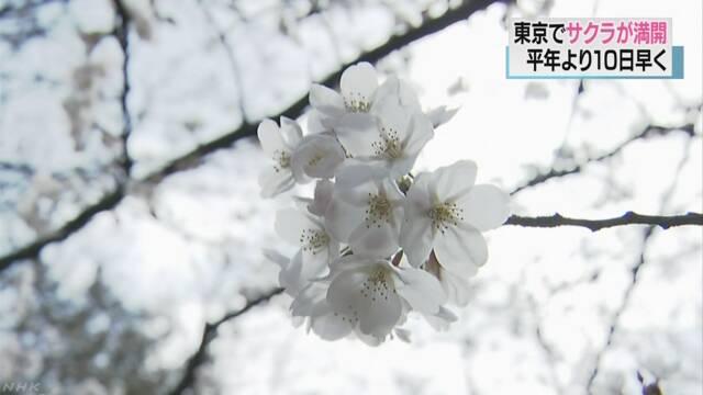 東京でサクラ満開 平年比10日早く