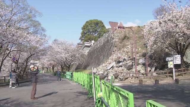 熊本城の桜の名所「行幸坂」を開放 花見の期間限定