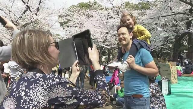 桜の季節 外国人も花見を楽しむ