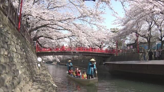 満開の桜眺めながら舟下り 岐阜 大垣