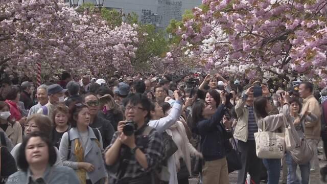 大阪の造幣局の「桜の通り抜け」が始まって花を楽しむ