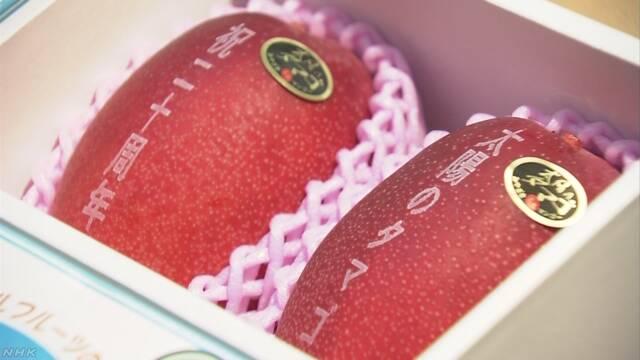 2個で40万円も! 宮崎産完熟マンゴー「太陽のタマゴ」初競り