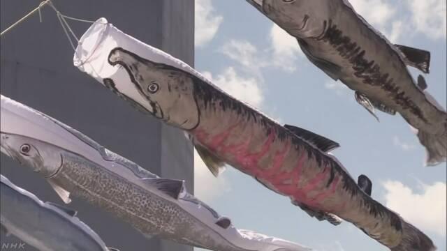 こどもの日を前に「サケのぼり」 北海道 標津町