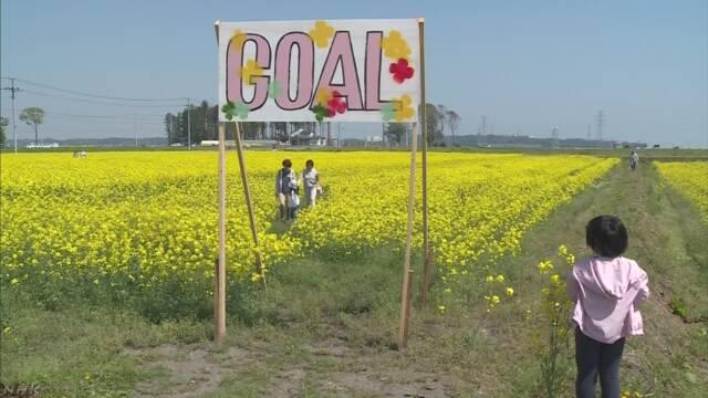 被災地に巨大な菜の花の迷路 福島 南相馬