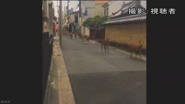 奈良市で鹿が町を走るビデオがインターネットに出る