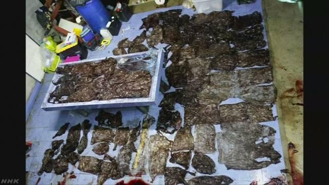 死んだクジラの胃から80枚余のプラスチック袋 タイ