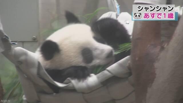 上野動物園のパンダのシャンシャンが1歳になる