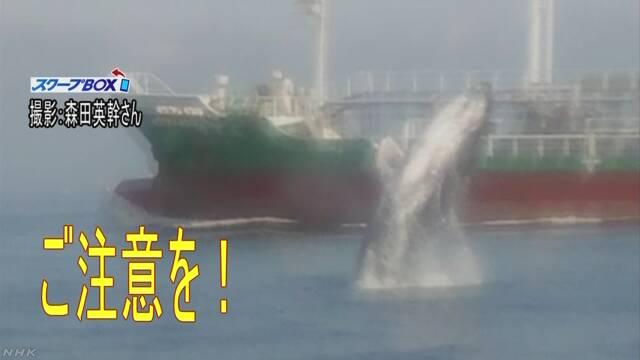 東京湾で鯨が泳いでいる「船は気をつけて」