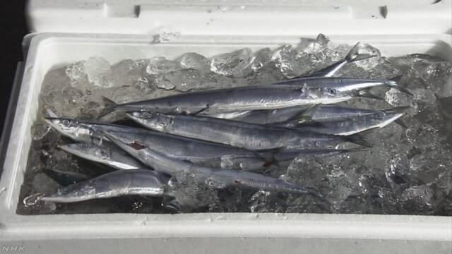 北海道でさんまの漁が始まる